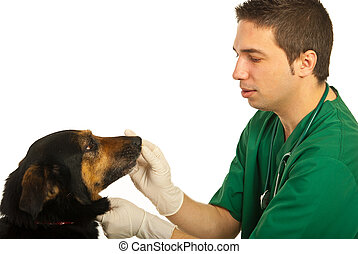 veterinário, cão, doutor
