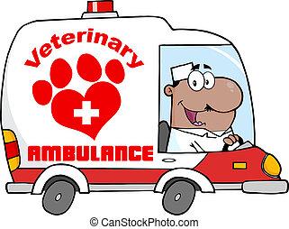 veterinär, afroamerikanisch, doktor