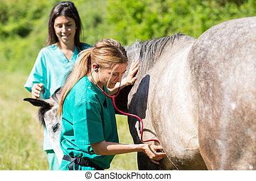 veterinär, pferdeartig