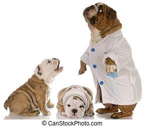 veterinære, omsorg