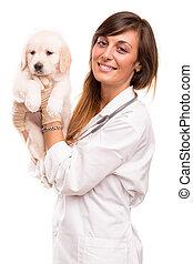 Veterinarian - A beautiful veterinarian with a golden ...
