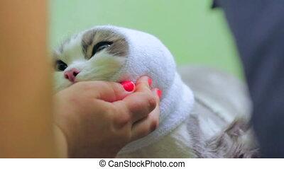 Veterinarian at work - Veterinarian taking care of a cat