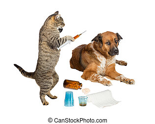 Humorous image of a veterinarian cat holding a syringe, treating a sick dog looking distrustful, isolated on white