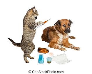 Veterinarian cat treating sick dog on white - Humorous image...
