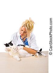 Veterinarian checkup of cat