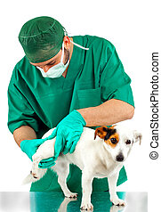 Veterinarian examines the dog's hip on white background