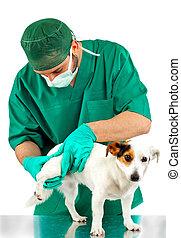 Veterinarian examines the dog's hip