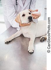 Veterinarian examining a cute dog