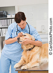 Veterinarian examining a cute dog