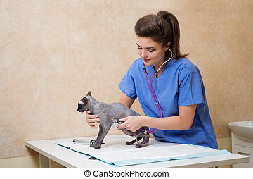 Veterinarian examining cat in veterinary clinic