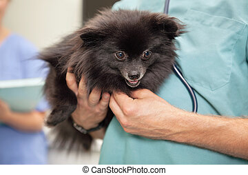 Veterinarian examining cute little dog