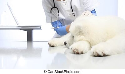 Veterinarian examining dog on table in vet clinic. exam of teeth, ears and fur.