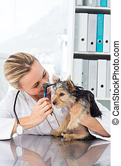 Veterinarian examining ear of dog