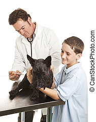 Veterinarian Giving Vaccination - Veterinarian giving...