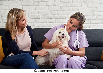 Veterinarian House Call With Doctor Dog Owner And Animal