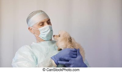 Veterinarian makes inspection of a poodle. He is going to vaccinate him