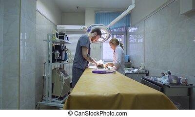 Veterinarian operating room. - Veterinarians prepare the dog...