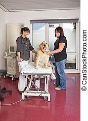 veterinarian preparing table - A veterinarian preparing the...