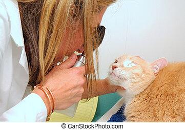 Veterinarian examining a cat.