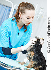 Veterinarian surgeon treating dog - Female veterinarian...