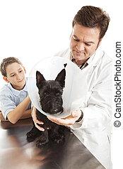 Veterinarian Treating Dog