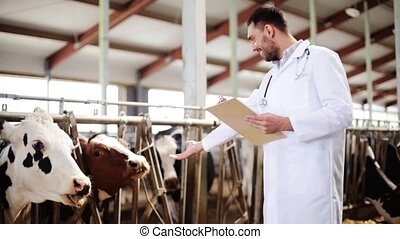 veterinarian with cows in cowshed on dairy farm -...
