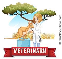 veterinario, canguro, hembra, parque, examinar