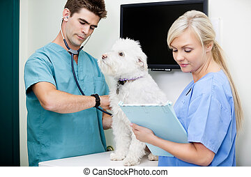 veterinario, doctor, perro que examina, con, hembra, enfermera, en, clínica