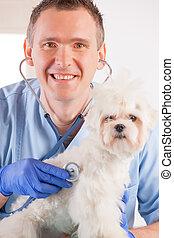 veterinario, e, cane