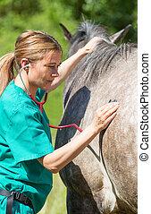 veterinario, equino