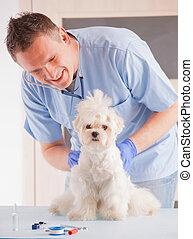 veterinario, y, perro