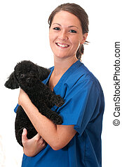 Veterinary assistant holding pet poodle isolated on white background.
