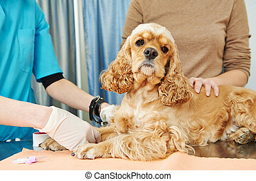 Veterinary blood test examination of the dog
