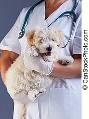 Veterinary care concept - little dog carried for examination