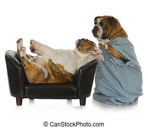 veterinary care - english bulldog doctor tending to sick...