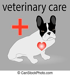 Veterinary care. French Bulldog, pet and animal, dog and ...