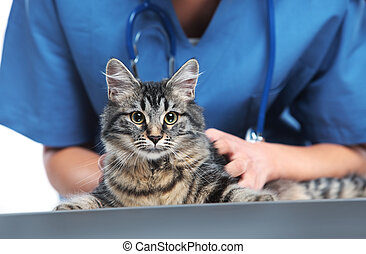 Veterinary caring of a cute cat - Close up shot of...