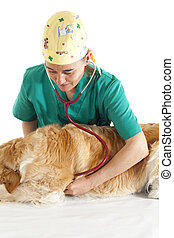 Veterinary consultation