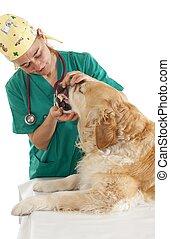 Veterinary consultation