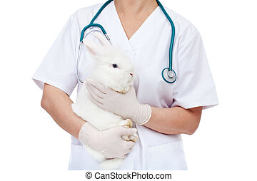 Veterinary doctor holding cute white rabbit