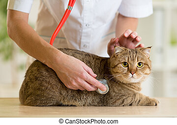 Veterinary doctor with british cat in clinic - Veterinary...