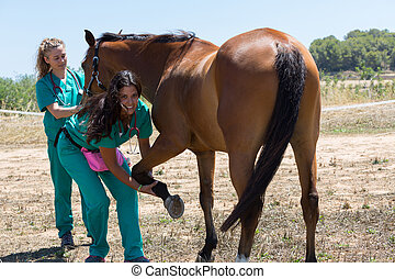 Veterinary horses on the farm