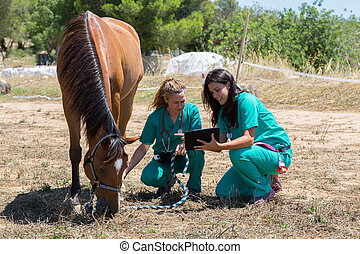 Veterinary horses on the farm making an inquiry with the...