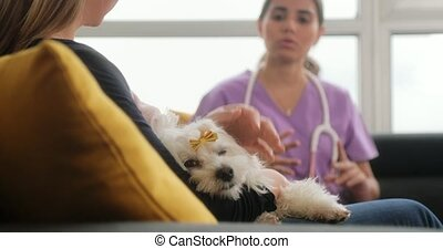 Veterinary House Call With Doctor Dog Owner And Pet - Young...