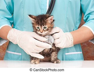 Veterinary survey of cute little kitten close-up