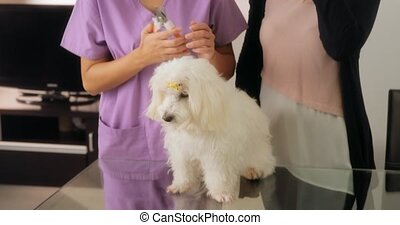 Veterinary Teaching How To Use Nail Clipper With Dog - Young...