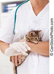 Veterinary treatment for a little kitten