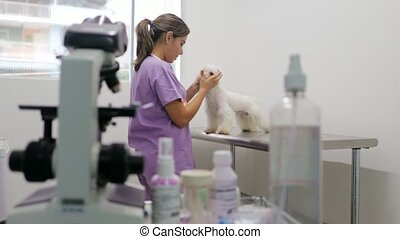 Veterinary Visit In Clinic With Vet And Sick Dog - Young...