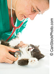 Veterinary with kitten - Veterinary conducting a review to a...