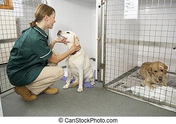 Vetinary Nurse Checking Sick Animals In Pens